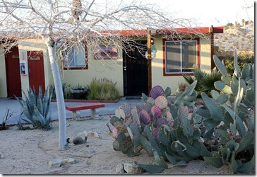 110220_harmony_motel_succulent_garden
