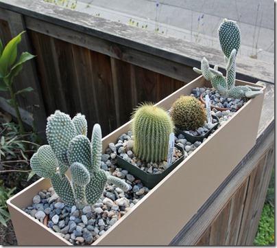 110411_cactus_box2