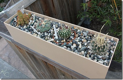 110412_cactus_box1a