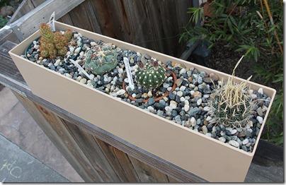 110412_cactus_box1a
