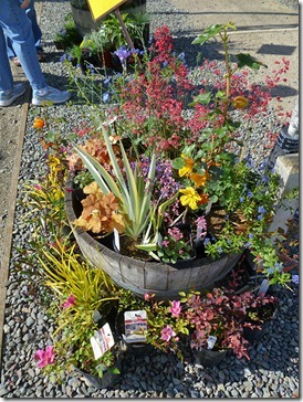 110430_UCD_Arboretum_plant_sale_10