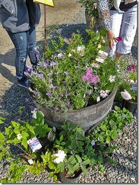 110430_UCD_Arboretum_plant_sale_11