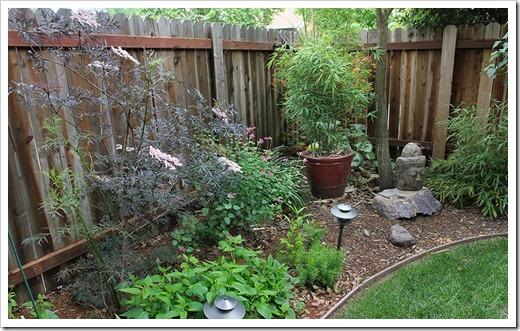 110514_backyard3