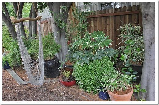 110514_backyard4