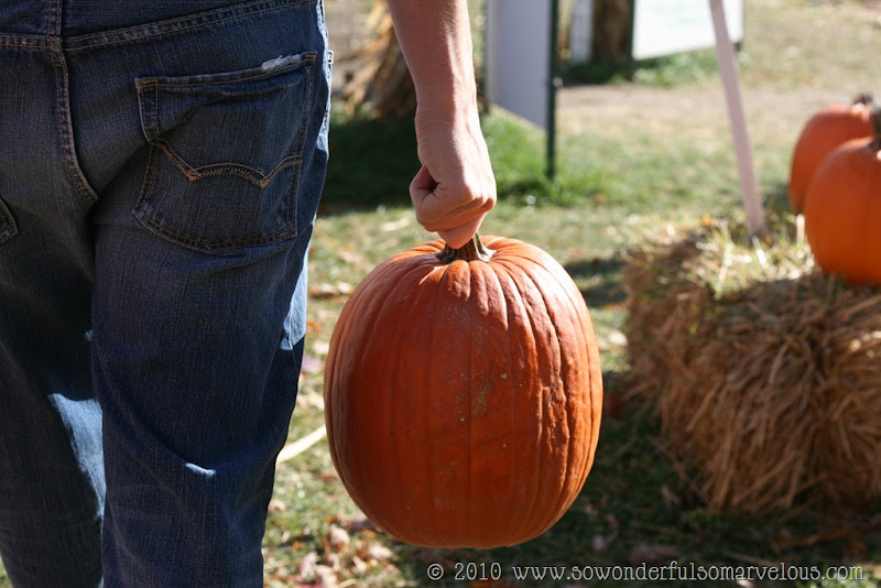 pumpkin patch 070