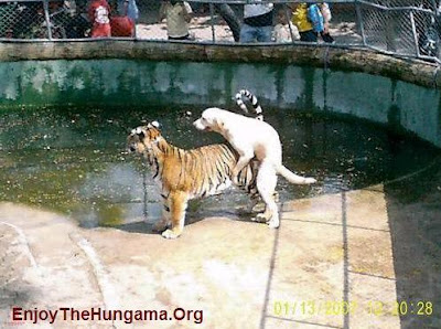 dog and tiger making it