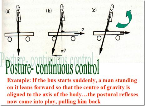 Body Righting Reflex Body on Head Righting Reflex