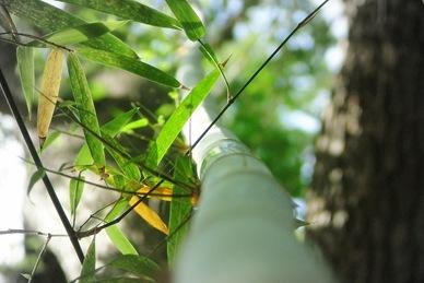 bamboo tres (4)