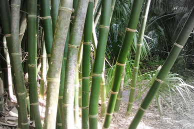 ocasiocasa things to do with bamboo part tres