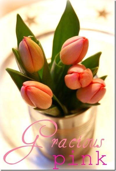 tulipan2