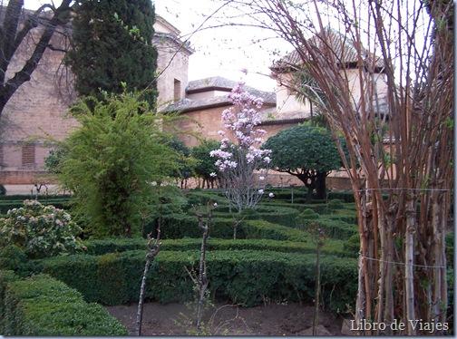 Jardines de la Alhambra. En el centro un esbelto Magnolio símbolo de la belleza y la delicadeza femenina. Visitar Granda