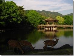 09Japan-Nara 326