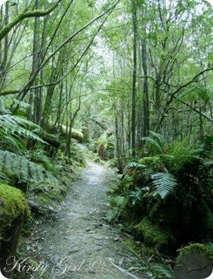 Mt. Wellington Track #1