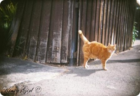holga-feline-friend-2