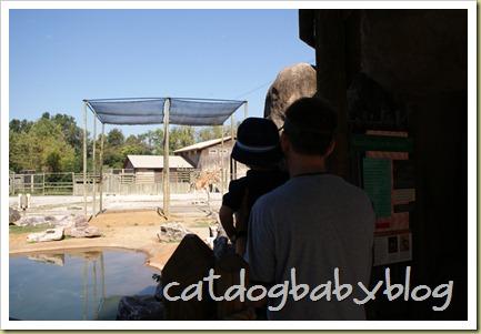 2010-09-29 k'ville zoo (7)
