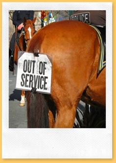 Inaugural-Horse