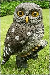 DEC-LITOW-01 - Little Owl