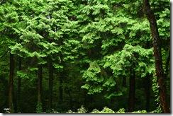 雨の日曜、森に行く5