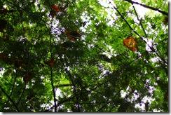 雨の日曜、森に行く2