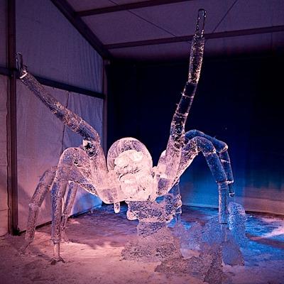 DSC_0757_spider