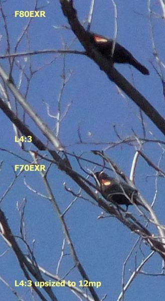 f80_f70_compare_L43.sized[1]