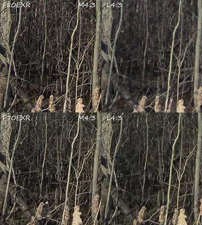 f80_f70_L43_M43_woods[1]