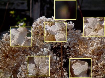 DSCF5295_hs10_hydrangea_zoom_crops[1]