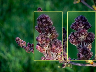 DSCF4272_f70_lilac_crops[1]