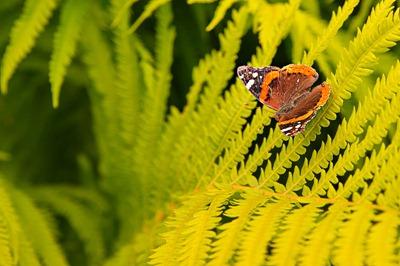 DSC_2793_butterfly[1]