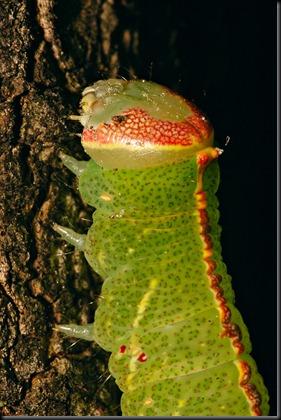 DSC_0536_caterpillar[1]