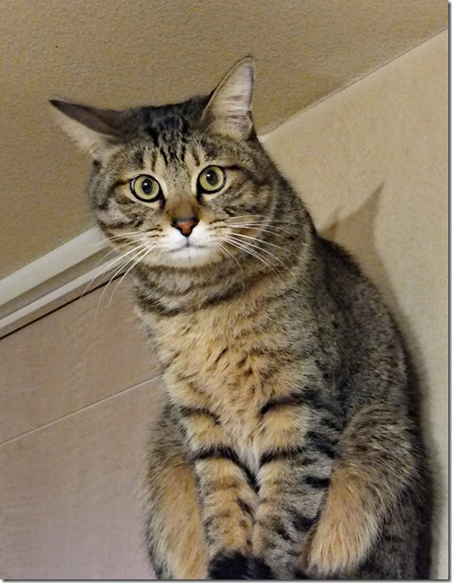 cat_3200