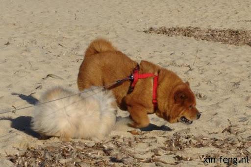 Ari en Chimay op het strand