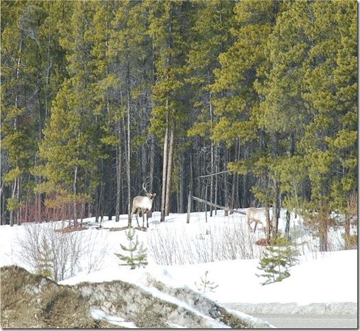 04-24-09 Alaskan Highway - Yukon 001a