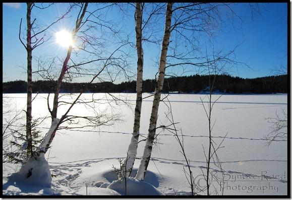 Vinterlandskap Mangen