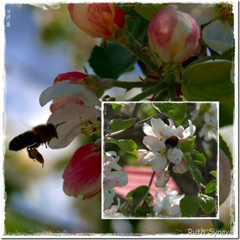 Montasje med epleblomster og humle