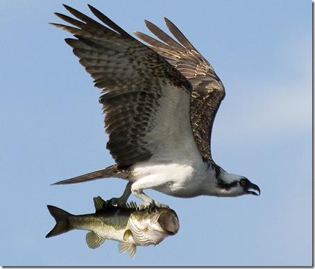 pajaro-pescado