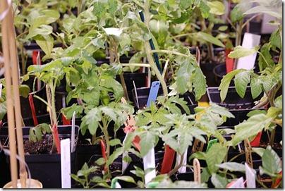5.15 plant sale 2