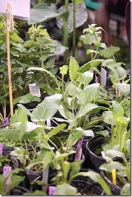 5.15 plant sale 4