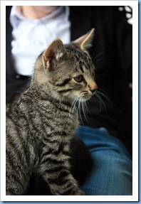katter3