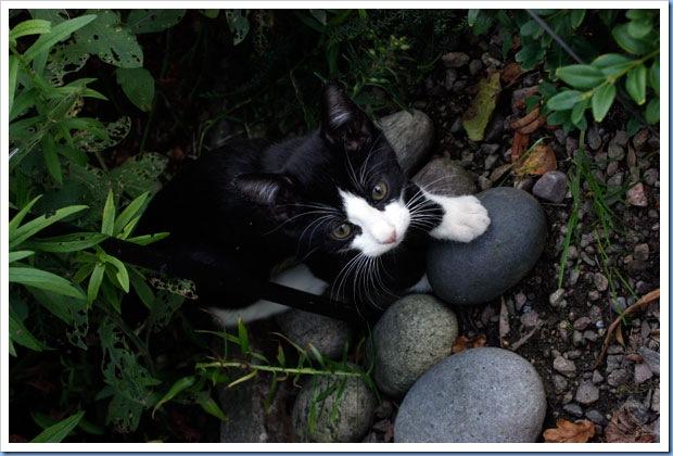 katter7