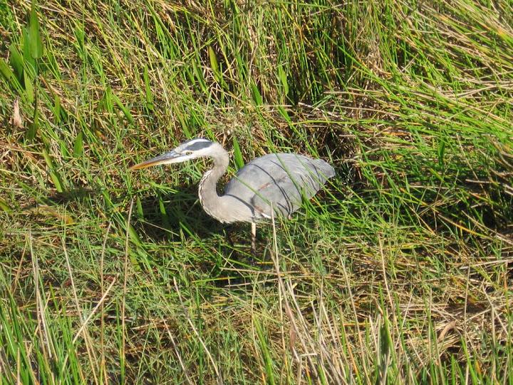 Un des oiseaux du parc