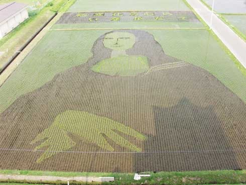 rice-paddy-art (26)