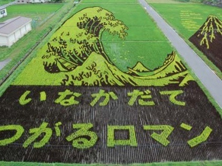 rice-paddy-art (6)