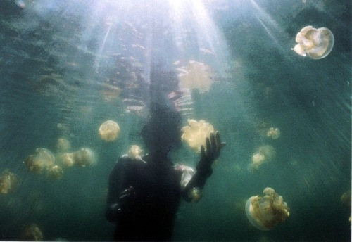 jellyfish-lake (7)