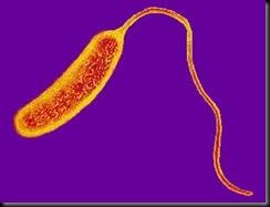 Vibrio cholrea
