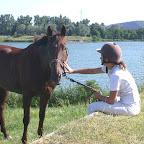 Camille (jeune cavalière, galop 7) et sa jument, Isa d Ouest. Après de très bonnes années de concours amateur, et suite a une blessure, Isa se consacre maintenant a la reproduction et a eu son premier poulain cette année (2010).