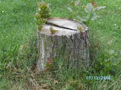 Stump one