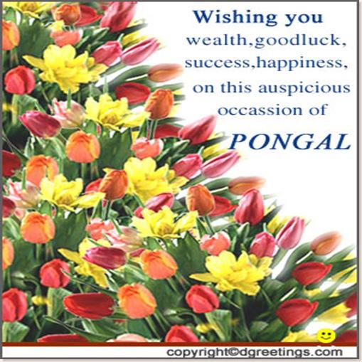 pongal08