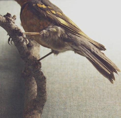 RIP bird