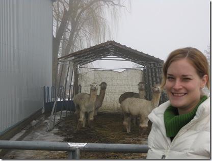 alpaca farm 036